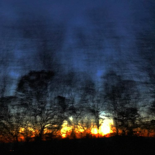 Sunset through the trees at 70mph.