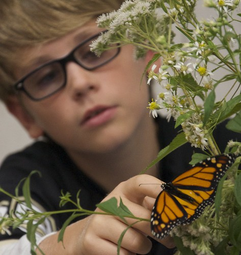 2015 Monarch Butterfly Festival