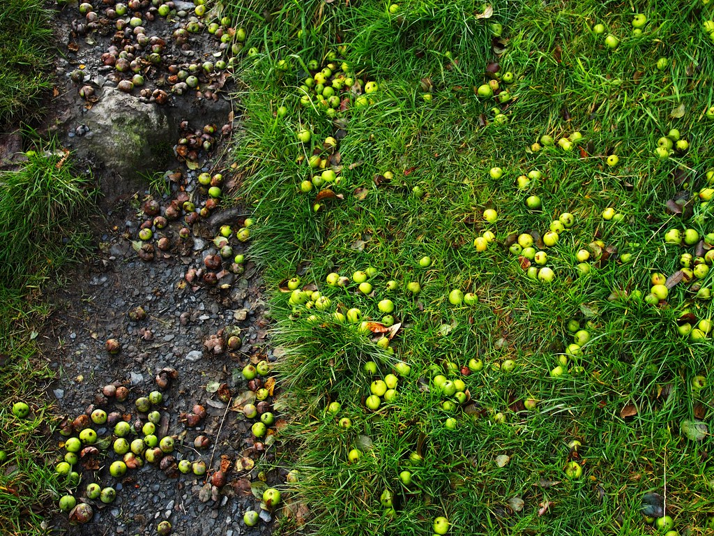 Crab Apples, Rhaeadr Valley, Wales