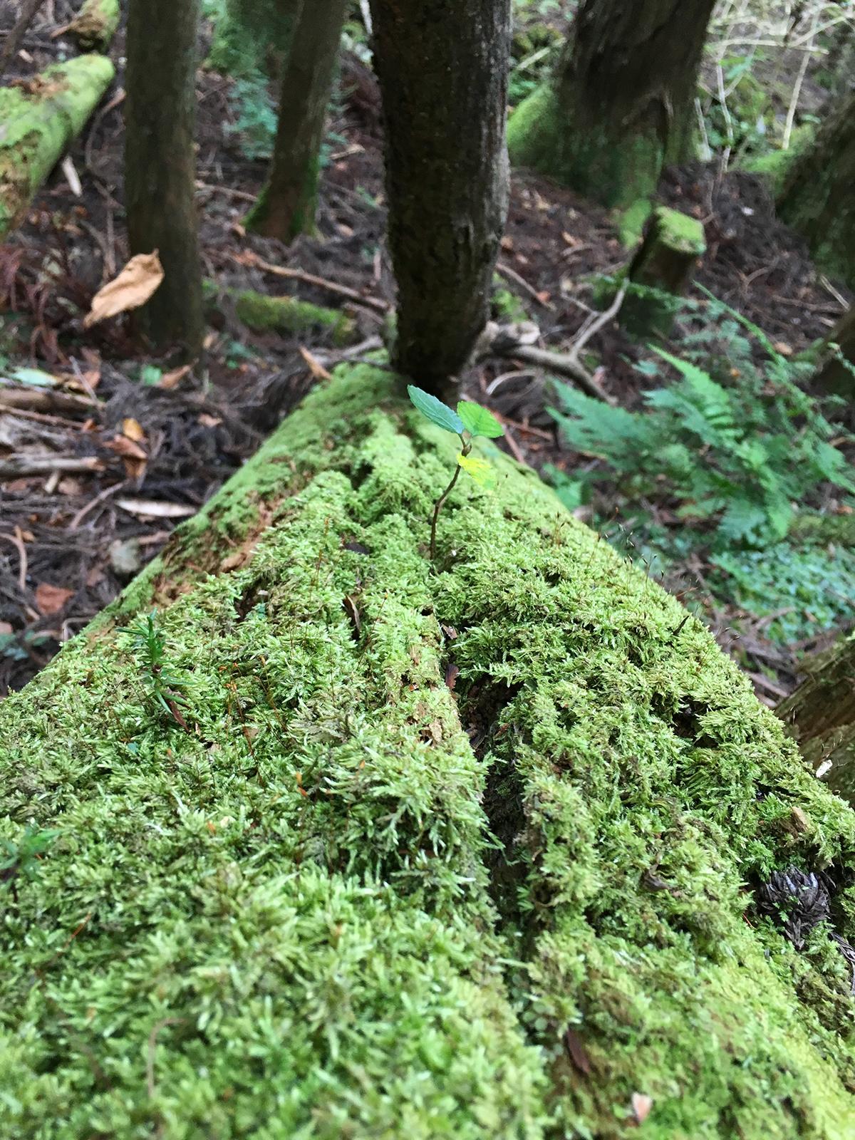 木とコケと新芽