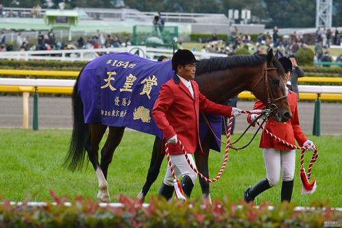 天皇賞(秋) Tenno Sho (Autumn) モーリス Maurice (JPN)