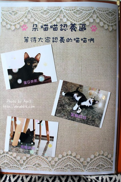 29435245434 02f0a04c56 z - 【熱血採訪】[台中]朵喵喵咖啡館--愛貓人士請進,這裡是貓咪中途之家、台中貓餐廳、貓咖啡廳@東區 自由路(已歇業)