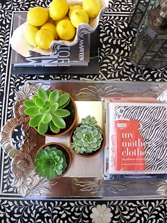 succulents via absolutely beautiful things | by The Estate of Things