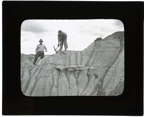 Excavation of Dinosaur National Monument Quarry, 1900-1935. | by Smithsonian Institution