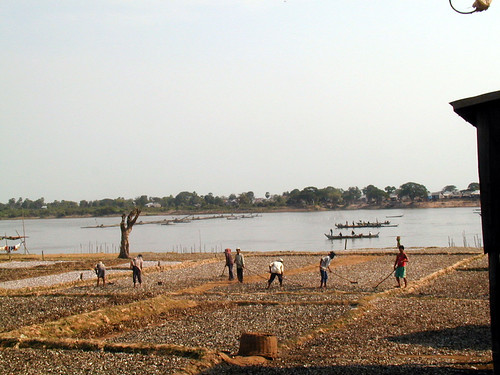 Drying fish along the Tonle Sap River, Cambodia, photo by Eric Baran, 1999