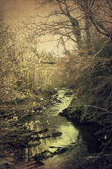 Crana River by Child of Danu