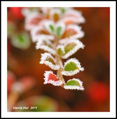 Frosty N7919e by Harris Hui (in search of light)