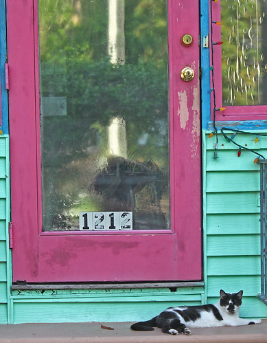 cat by a hot pink door | by psyberartist