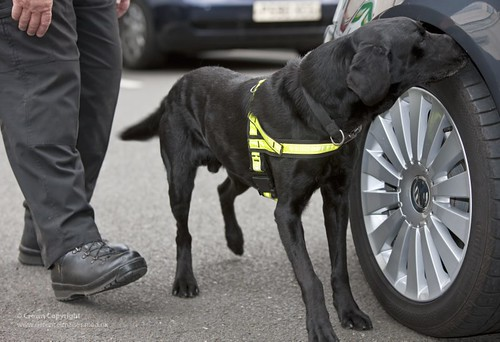 MOD Police Search Dog | by Defence Images