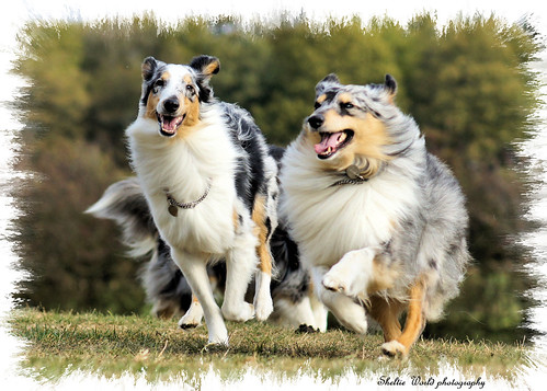 I only need mention your name | by Sheltie Dog World