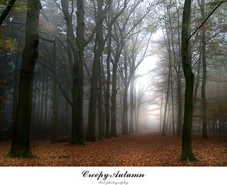 creepy autumn | by Zino2009 (bob van den berg)