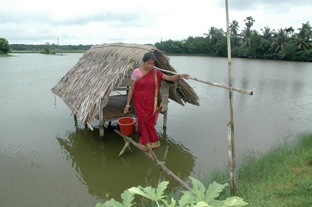 Feeding the fish in pond, Bangladesh. Photo by WorldFish, 2008.