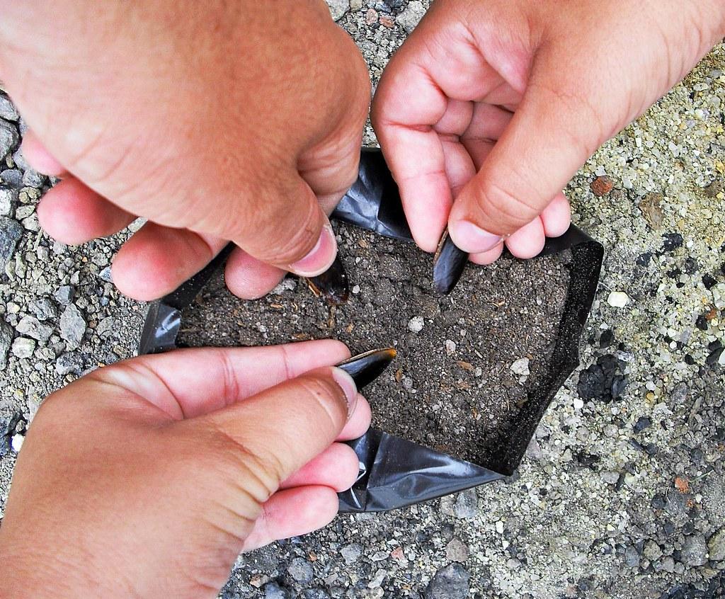 mãos semeadoras