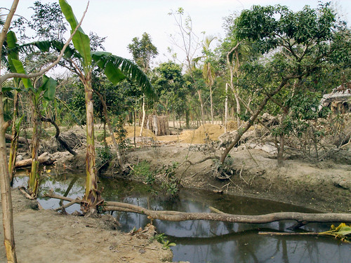 Pond dyke damaged by tidal surge, Bangladesh. Photo by WorldFish, 2002