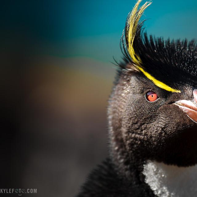 Sometimes we talk to penguins