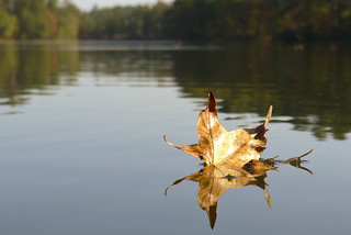 27OCT11: leaf on Satcher | by tarboxje