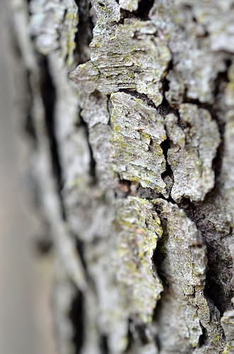bark texture_216 | by coco knits