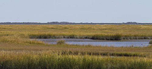 Fall meadow grasses at Forsythe NWR | by bsouthj
