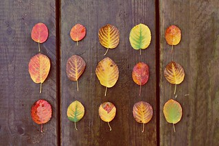 A collection of leafs | by mazarin♥