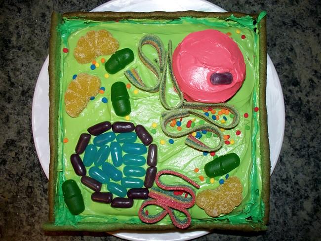 3d Plant Cell Diagram 3d Plant Cell