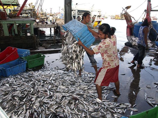 Small-scale fisheries, Kota Kinabalu, Malaysia, photo by Jamie Oliver, 2007