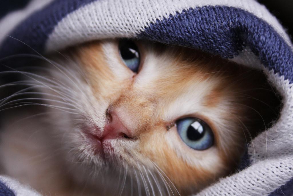 Behind Blue Eyes.. [EXPLORE! #8 !!!!! thank youu!]