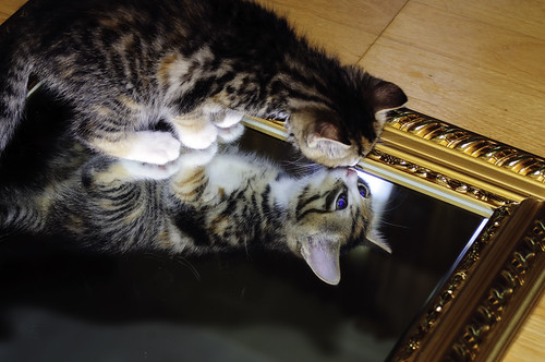 cat in the mirror | by DM* Photo