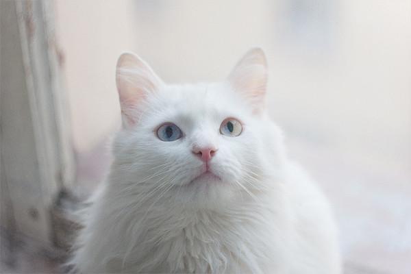 cat named Cat