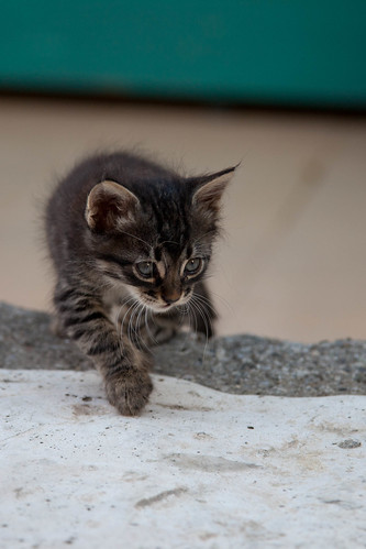 Stray Kitten Prowling, Sarigerme | by flatworldsedge