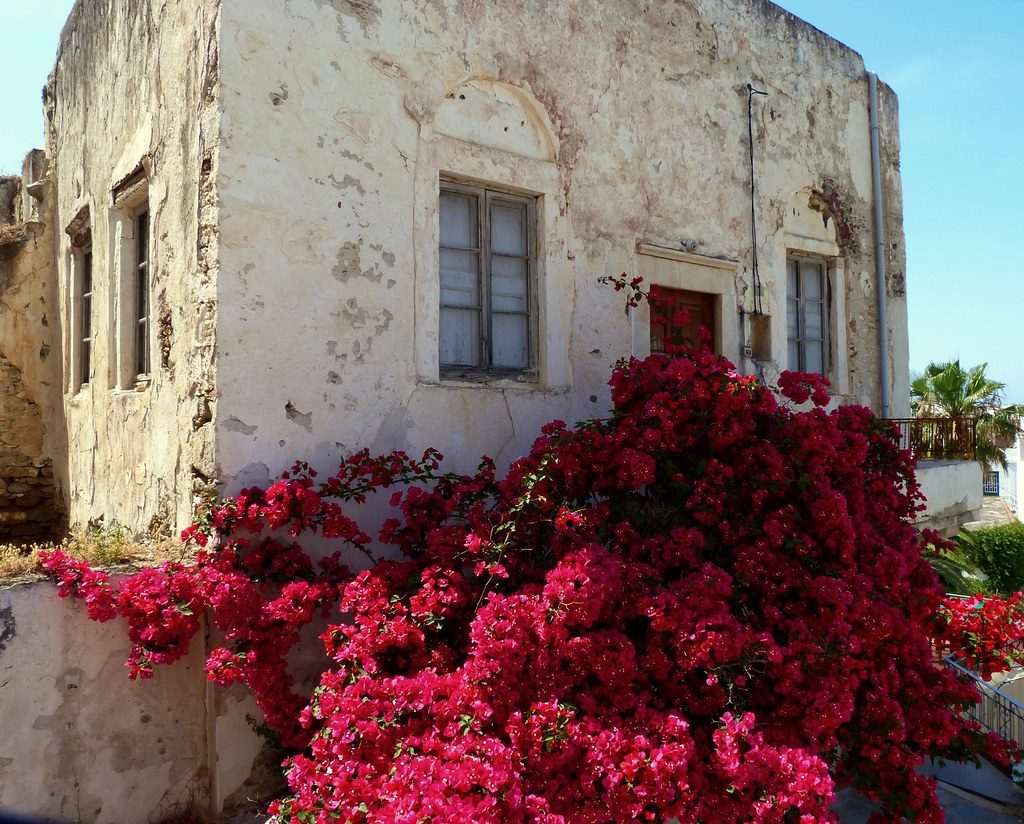 Old house and bougainvillea