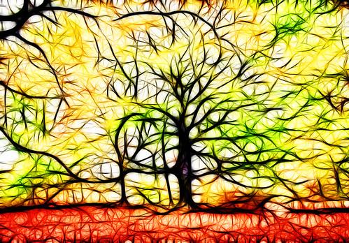 Beech Roots 3894xx