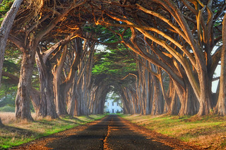 Tree Tunnel | by Lee Sie