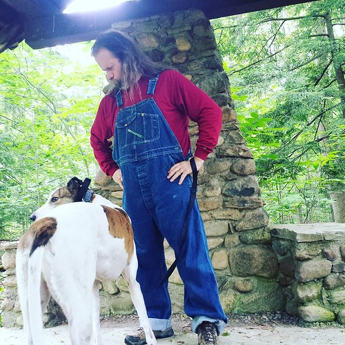 Uncooperative dee-oh-gee is uncooperative. #Cane #DogsOfInstagram #greyhound #overalls #vintage #Key #bluedenim