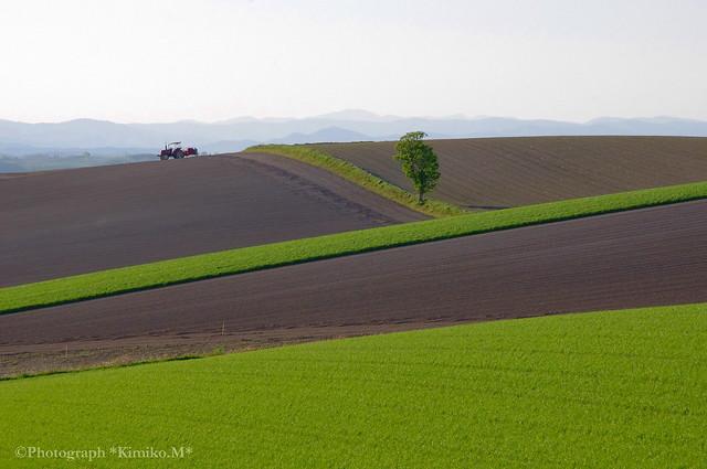 丘の上のトラクター