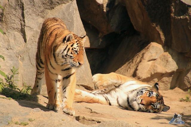 Tierpark Berlin 28.05.2016  09