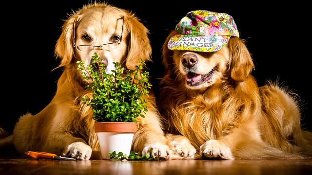 Topiary?