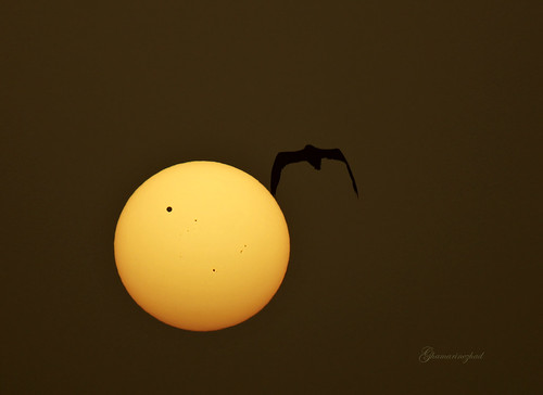 sunrise and transit of venus! (Explored #5) | by starrypix