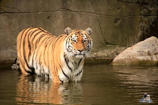 Tierpark Hagenbeck 21.05.2016  0186