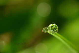 little drops | by ronjaa photography