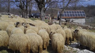 Farmers can increase their revenues with electricity from the new solar panel | by UNDP in Europe and Central Asia