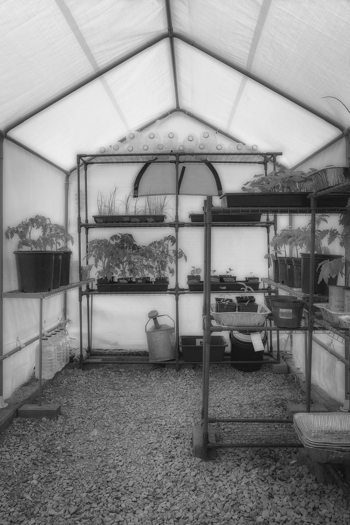 black and white greenhouse