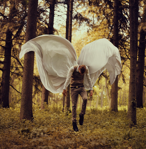 Fragile Wings | by Kyle.Thompson