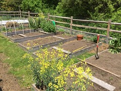 may garden IMG_6263