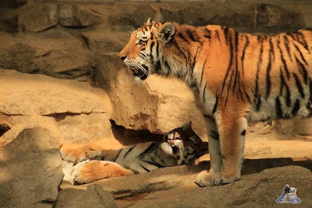 Tierpark Berlin 28.05.2016  0266