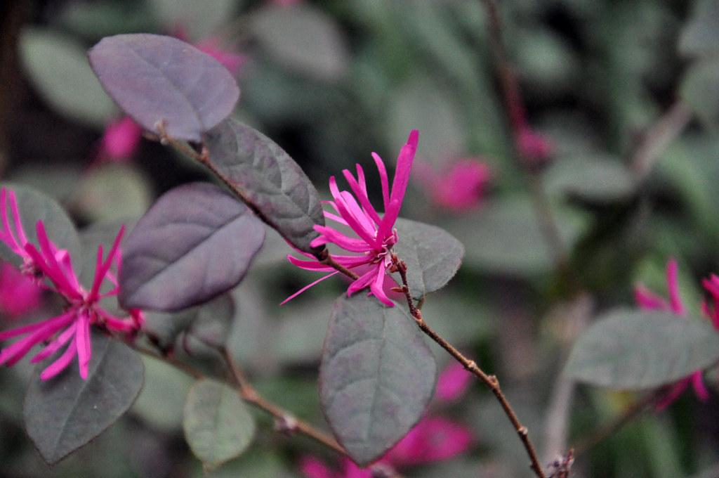Ботанический сад DSC_0167