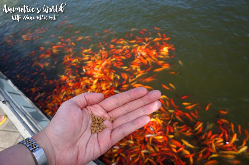 Seda Nuvali Fish Feeding