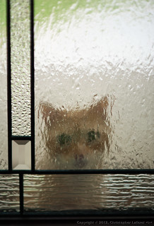 """Pweese Let Me In..."" 