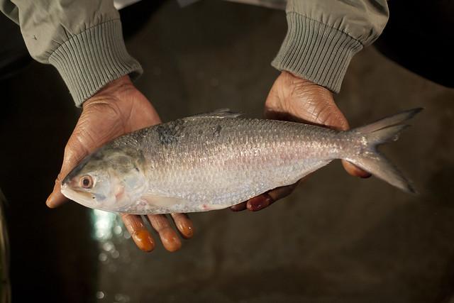 Fish market in Khulna, Bangladesh. Photo by Mike Lusmore/Duckrabbit, 2012.