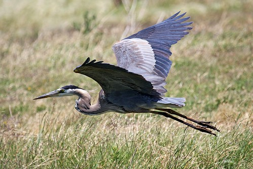 1gbheron dave harper oakley | by Contra Costa Times