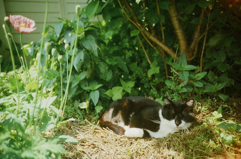 Lomography : cat